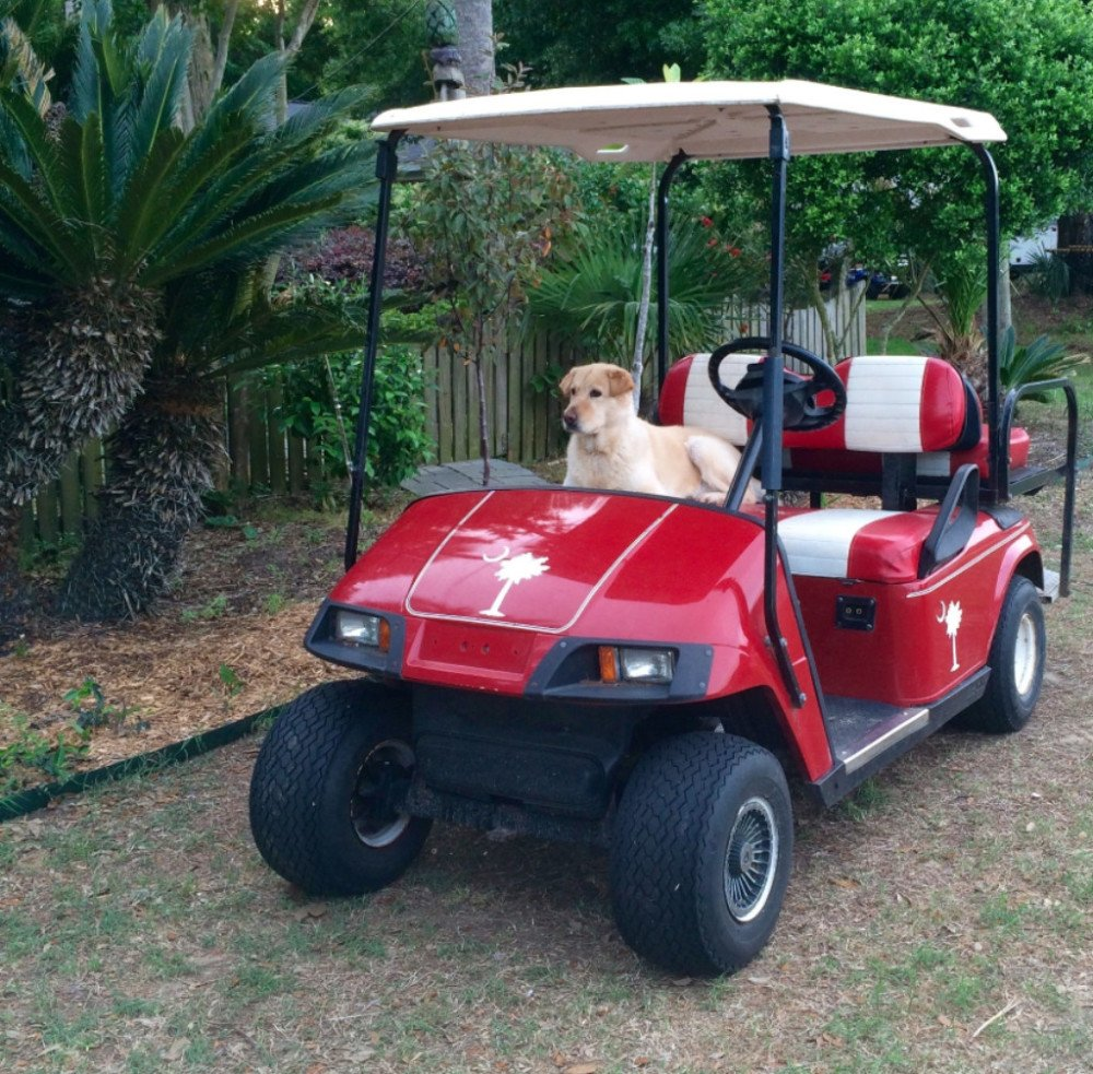 Isle Of Palms Golf Cart Rentals Prices And Rental